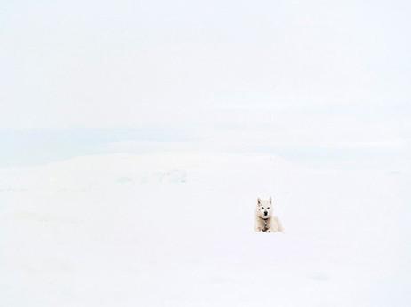 White Dog, A4, kuvan koko 18 x 24 cm